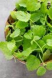 Fresh raw mint leaves on gray background. Fresh raw mint leaves on gray background Stock Image