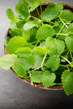 Fresh raw mint leaves on gray background. Fresh raw mint leaves on gray background Royalty Free Stock Images