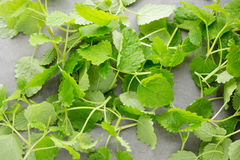Fresh raw mint leaves on gray background.  Stock Images