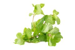 Fresh raw mint leaves isolated on white background Royalty Free Stock Images
