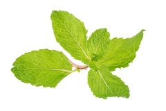 Fresh raw mint leaves isolated on white background Stock Photography
