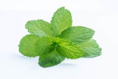 Fresh raw mint leaves isolated on white. Background Stock Photo