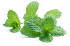 Fresh raw mint leaves isolated on white. Background Stock Photo