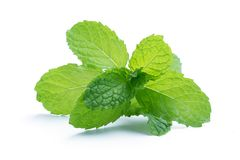 Fresh raw mint leaves isolated on white. Background Stock Photography