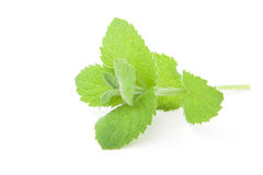 Fresh raw mint leaves Stock Photo