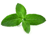 Fresh raw mint. Leaves isolated on white background Royalty Free Stock Images