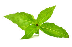 Fresh raw mint leaves isolated on white Royalty Free Stock Photography