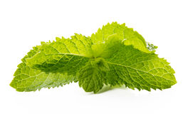 Fresh raw mint leaves isolated on white background.  Royalty Free Stock Photo