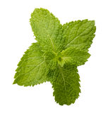 Fresh raw mint leaves isolated on white background.  Royalty Free Stock Image