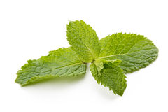 Fresh raw mint leaves isolated on white background Stock Image