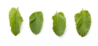 Fresh raw mint leaves isolated on white background.  Royalty Free Stock Photos