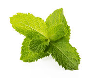 Fresh raw mint leaves isolated on white background.  Stock Photography