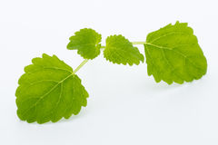 Fresh raw mint leaves isolated on white background. Stock Photos