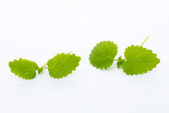 Fresh raw mint leaves isolated on white background.  Stock Photo