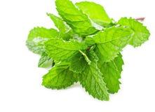Fresh raw mint leaves. Fresh raw mint leaves isolated on white background Royalty Free Stock Photo