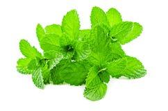 Fresh raw mint leaves. Fresh raw mint leaves isolated on white background Stock Image