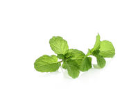 Fresh raw mint leaves. Isolated on white background Stock Photography