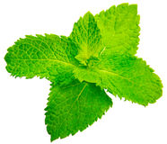Fresh raw mint leaves isolated on white background.  Royalty Free Stock Photography
