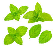 Fresh raw mint leaves isolated. On white background Royalty Free Stock Photos