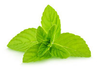 Fresh raw mint leaves isolated. On white background Royalty Free Stock Photo