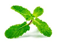 Fresh raw mint leaves isolated on white background with clipping path royalty free stock images