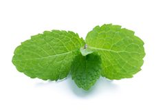 Fresh raw mint leaves isolated on white. Background Royalty Free Stock Images