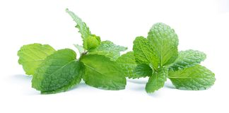 Fresh raw mint leaves isolated on white. Background Stock Photos