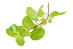 Fresh raw mint leaves isolated on white background Royalty Free Stock Photo