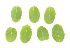 Fresh raw mint leaves isolated on white background.  Royalty Free Stock Images