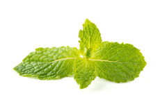 Fresh raw mint leaves isolated on white background Stock Images