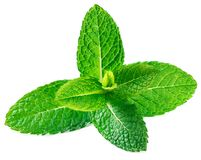 Fresh raw mint leaves isolated on white background. Spearmint, p. Eppermint close up Royalty Free Stock Photo