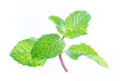 Fresh raw mint leaves isolated on white. Background Stock Image