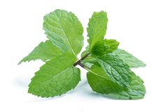Fresh raw mint leaves isolated on white. Background Royalty Free Stock Photos