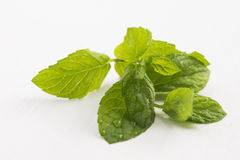 Fresh raw mint leaves. On white Royalty Free Stock Images