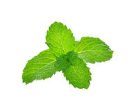 Fresh raw mint leaves. On white background Stock Photo