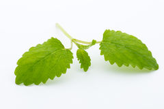 Fresh raw mint leaves  on white background. Fresh raw mint leaves  on white background Royalty Free Stock Photos