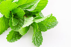Fresh raw mint leaves. Fresh raw mint leaves on white background Royalty Free Stock Image