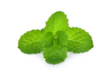 Fresh raw mint leaves  on white background. Stock Photography