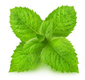 Fresh raw mint leaves. On white background Royalty Free Stock Photo