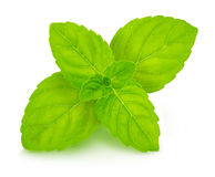 Fresh raw mint leaves. On white background Royalty Free Stock Photos