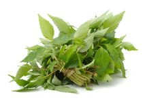 Fresh raw mint leaves. On a white background Stock Photo