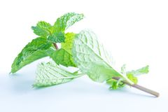 Fresh raw mint leaves  on white. Background Stock Images