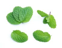 Fresh raw mint leaves  on white. Background Stock Image