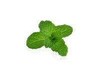Fresh raw mint leaves on white background Stock Image