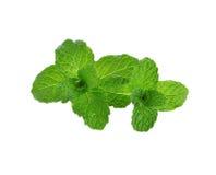 Fresh raw mint leaves on white background Stock Photo