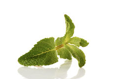 Fresh raw mint leaves on white. Freash raw mint leaves isolated on white mackground Stock Photography