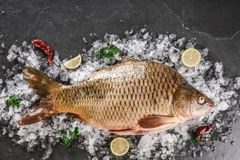 Fresh raw mirror carp fish with spices, lemon on ice over dark stone background. Creative layout made of fish, Seafood, top view. Flat lay royalty free stock photos