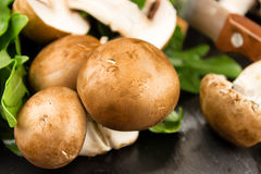 Fresh raw mushrooms brown champignons and green arugula on a dar Royalty Free Stock Image