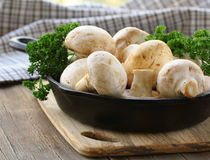 Fresh raw mushrooms champignons with herbs. Parsley Royalty Free Stock Photo