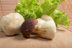 Fresh raw mushrooms and lettuce. On  wooden board Stock Images